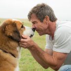 Review – A Dog's Purpose (2017)